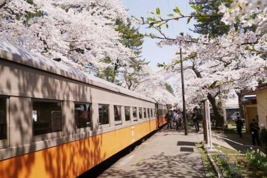 2020年(令和2年)金木桜まつり 芦野公園【開催中止】